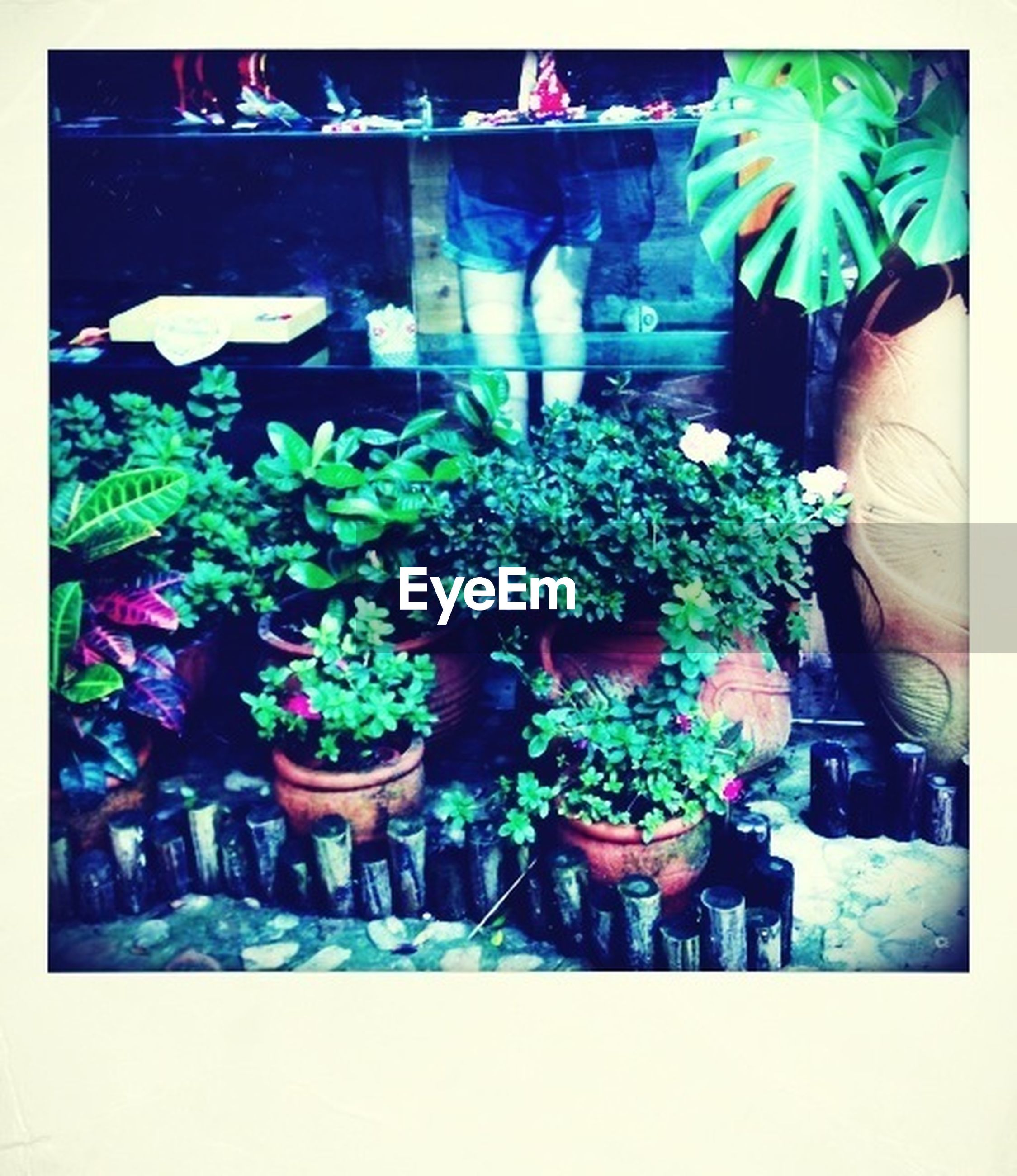 transfer print, potted plant, auto post production filter, flower, plant, indoors, growth, flower pot, vase, freshness, bouquet, variation, retail, decoration, table, day, high angle view, person, arrangement