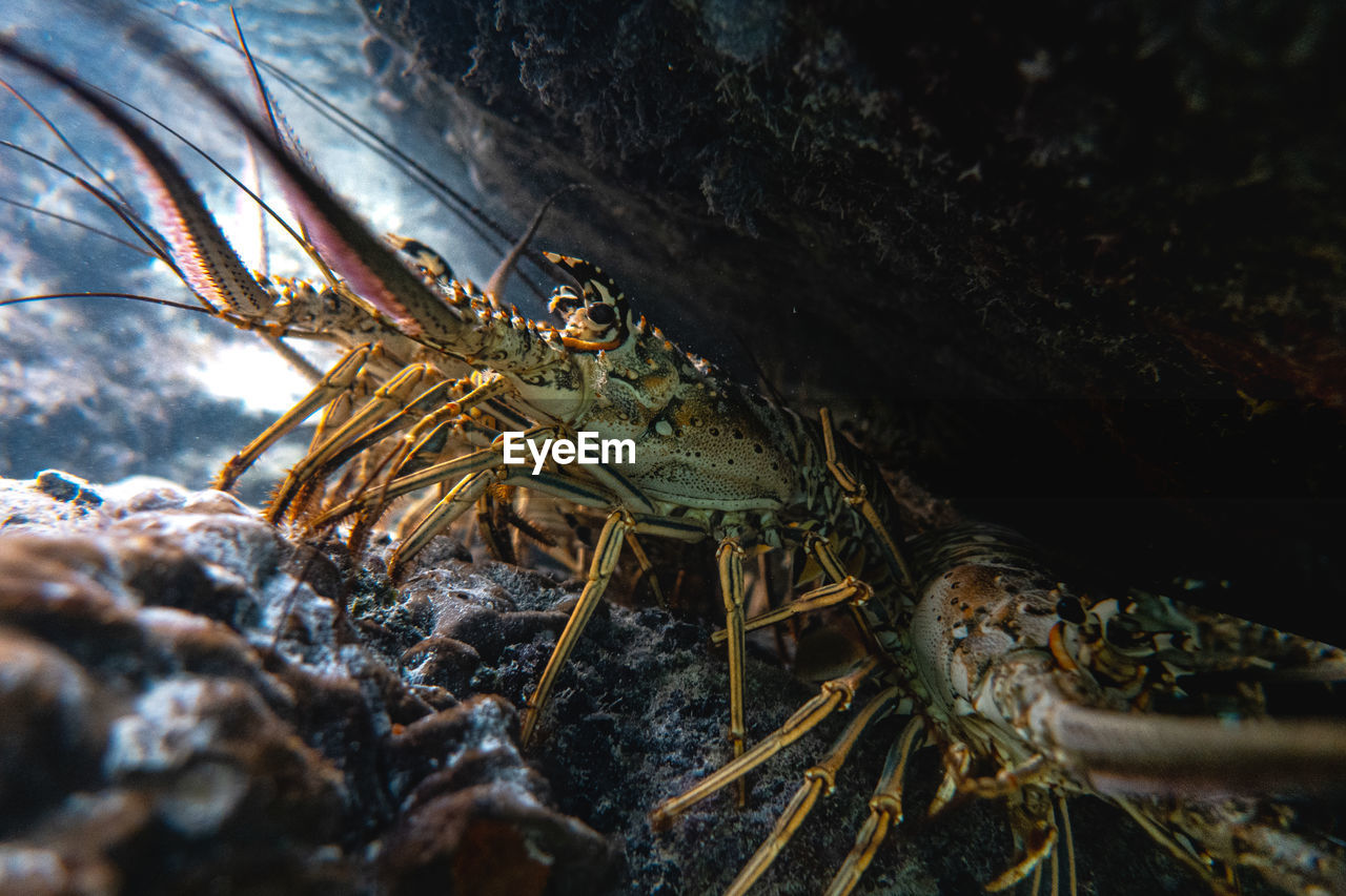 Close-up of crabs in sea