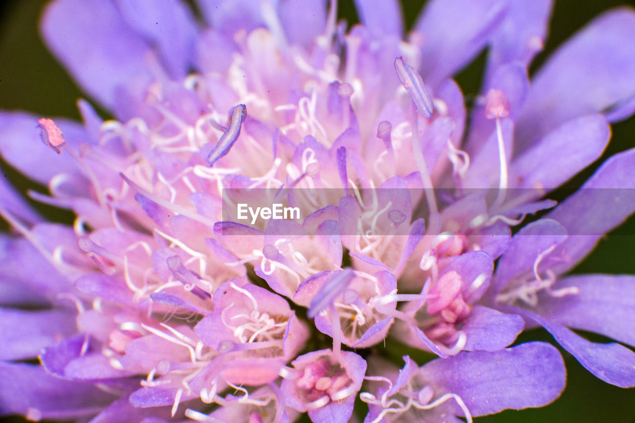 flower, flowering plant, vulnerability, freshness, beauty in nature, fragility, petal, close-up, plant, growth, flower head, inflorescence, purple, nature, no people, selective focus, botany, day, blossom, springtime, pollen, bunch of flowers, lilac