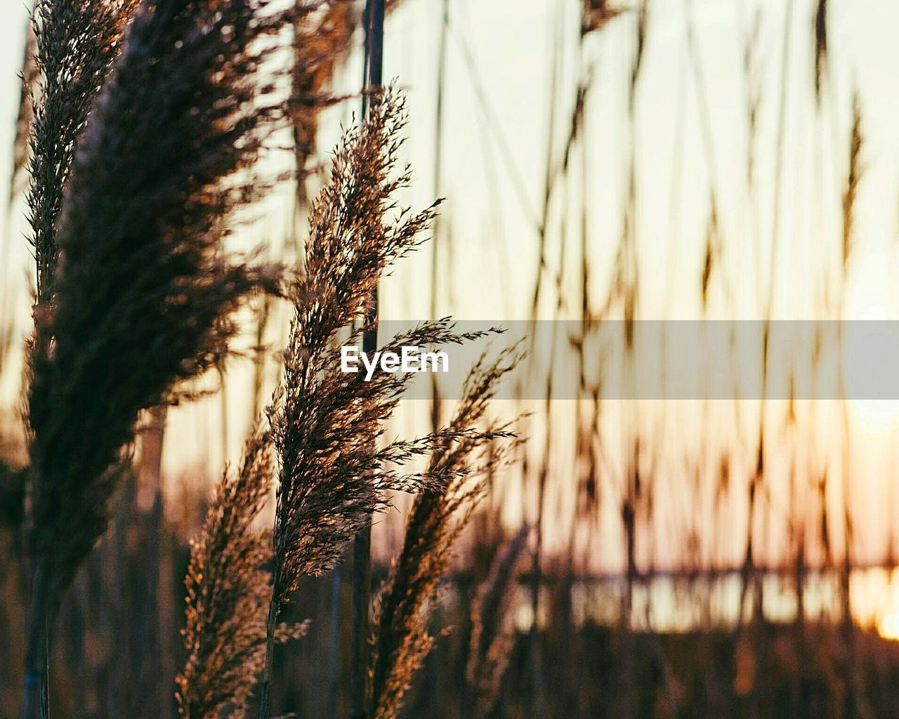 crop, agriculture, growth, plant, nature, cereal plant, field, wheat, rural scene, no people, close-up, outdoors, day