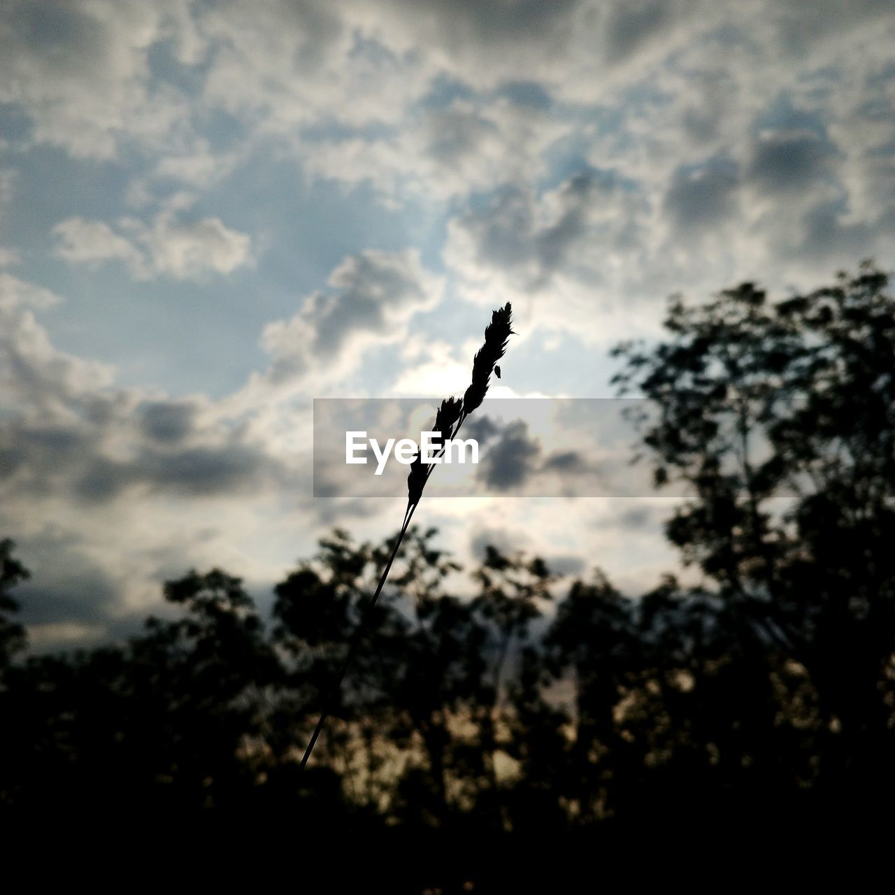 sky, cloud - sky, plant, growth, beauty in nature, tree, tranquility, nature, silhouette, low angle view, no people, sunset, day, outdoors, tranquil scene, focus on foreground, selective focus, scenics - nature, close-up