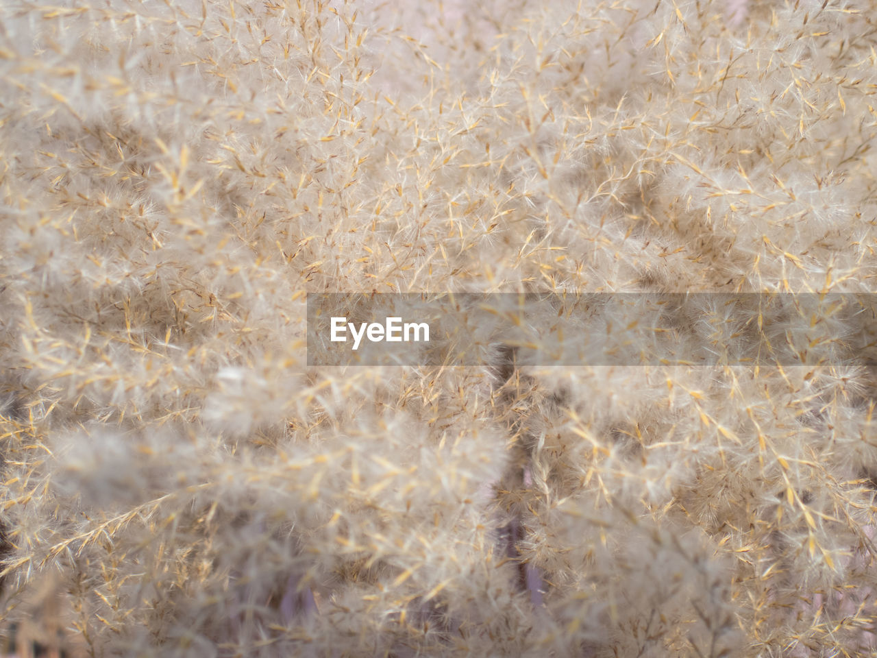 nature, agriculture, backgrounds, cereal plant, full frame, pattern, field, no people, growth, day, plant, textured, wheat, close-up, fragility, beauty in nature, gold colored, rural scene, outdoors, fiber, grass, freshness