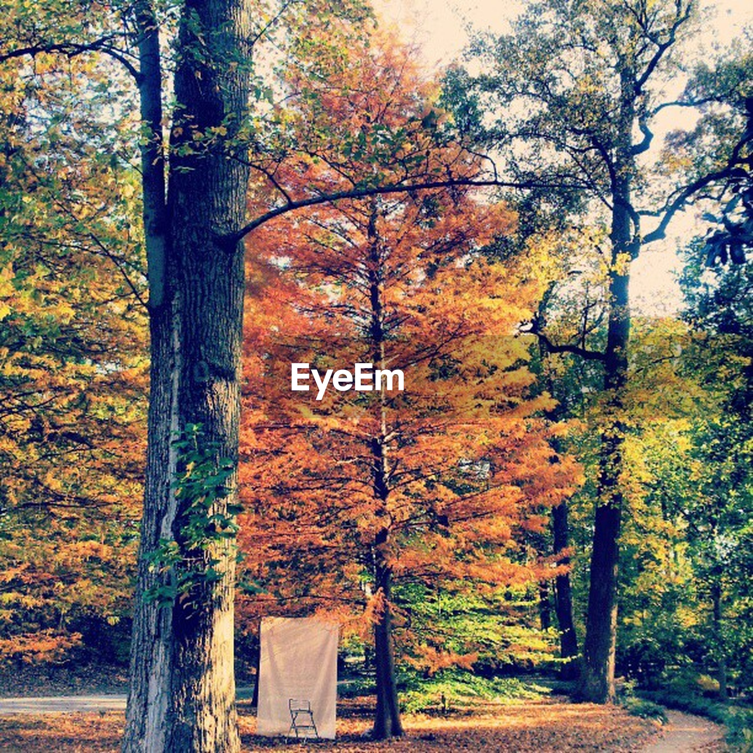 tree, autumn, change, tree trunk, growth, season, orange color, nature, branch, beauty in nature, tranquility, park - man made space, built structure, scenics, tranquil scene, forest, day, outdoors, leaf, park