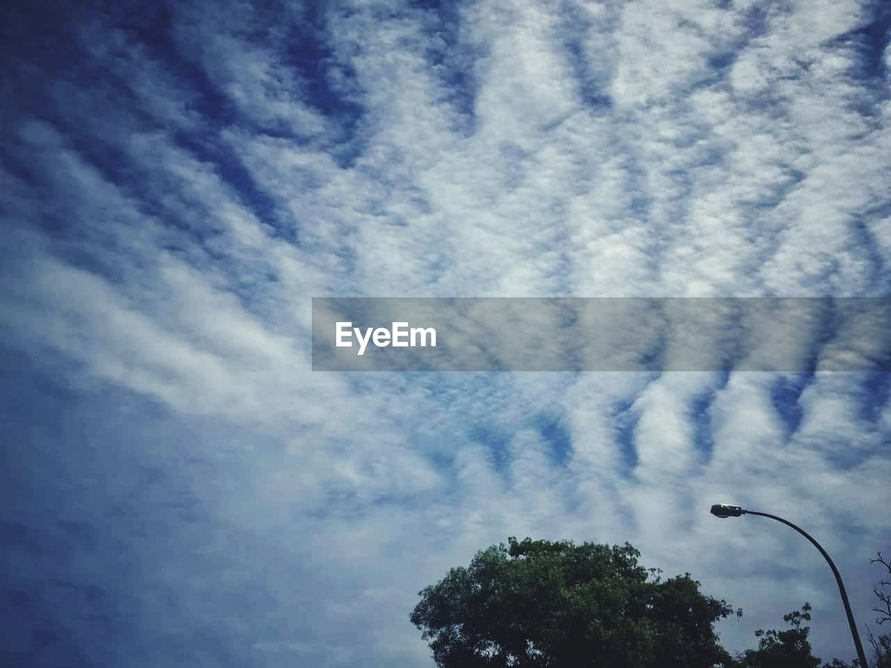 low angle view, sky, tree, cloud - sky, day, nature, outdoors, no people, blue, beauty in nature, vapor trail