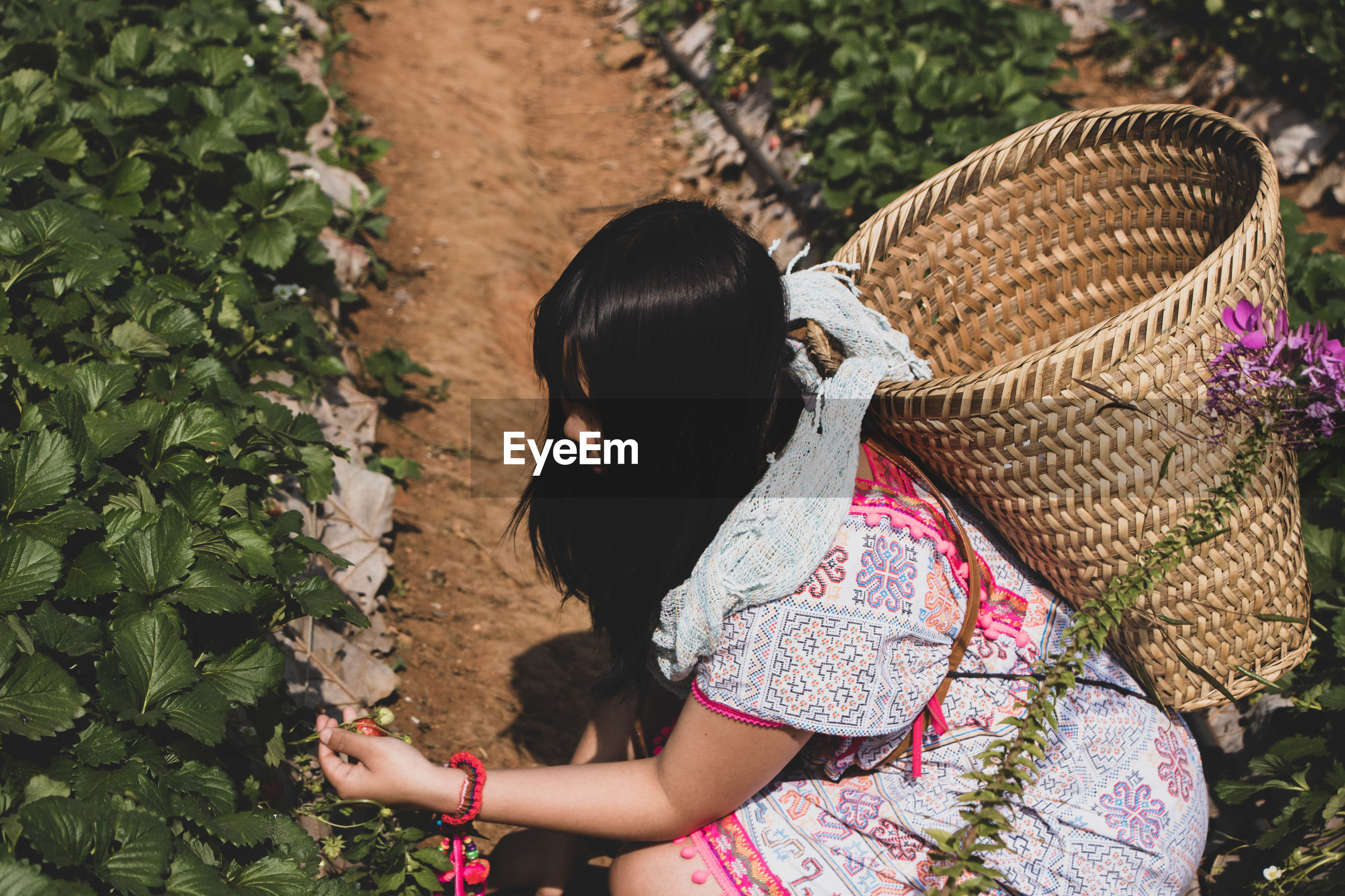 High angle view of woman harvesting berries in farm