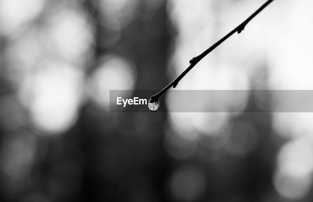 drop, water, close-up, focus on foreground, nature, beauty in nature, no people, selective focus, wet, tranquility, day, plant, outdoors, growth, twig, dew, purity, raindrop, rain, rainy season