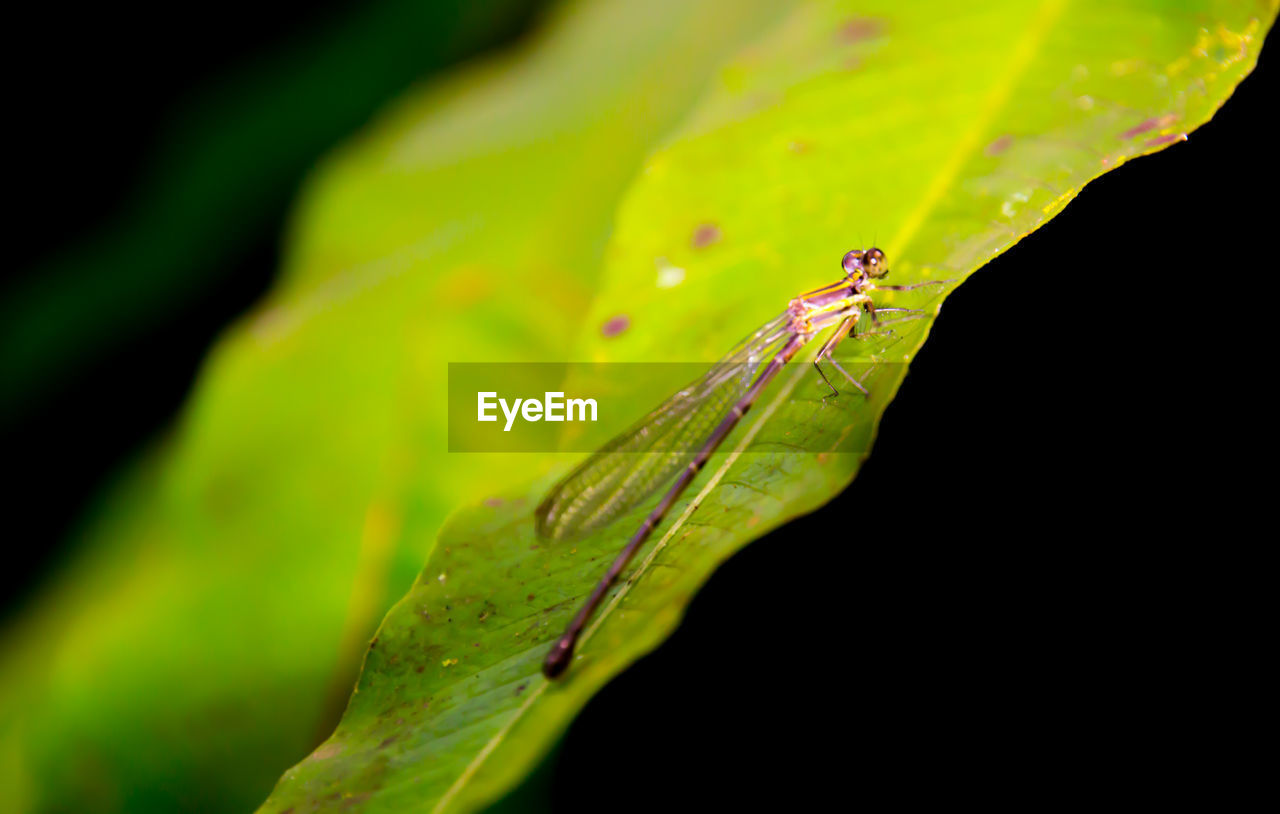 animals in the wild, one animal, animal themes, insect, green color, animal wildlife, no people, close-up, leaf, nature, outdoors, day, plant