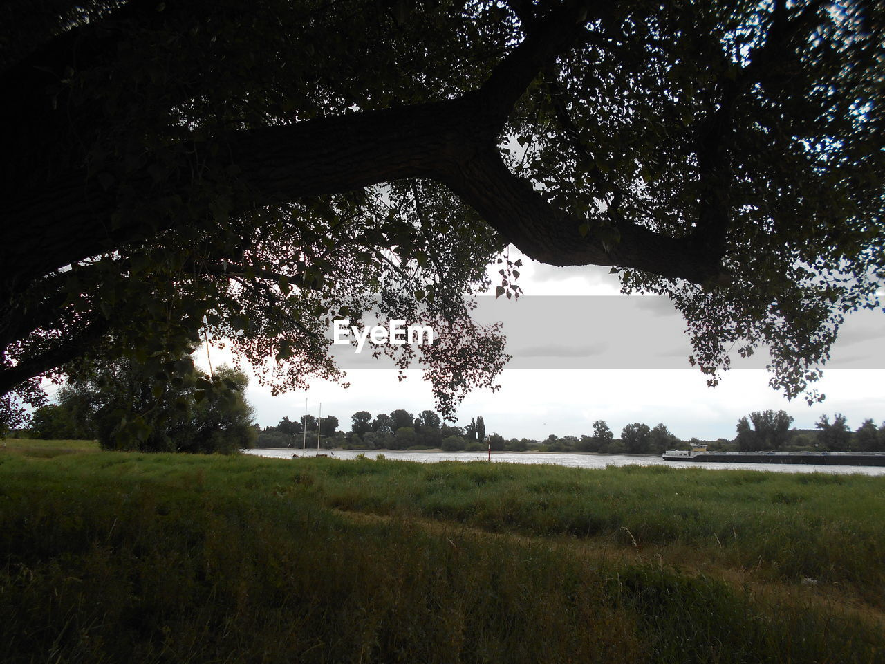 tree, plant, land, tranquility, landscape, sky, environment, tranquil scene, growth, field, grass, beauty in nature, nature, scenics - nature, no people, non-urban scene, day, outdoors, green color, rural scene