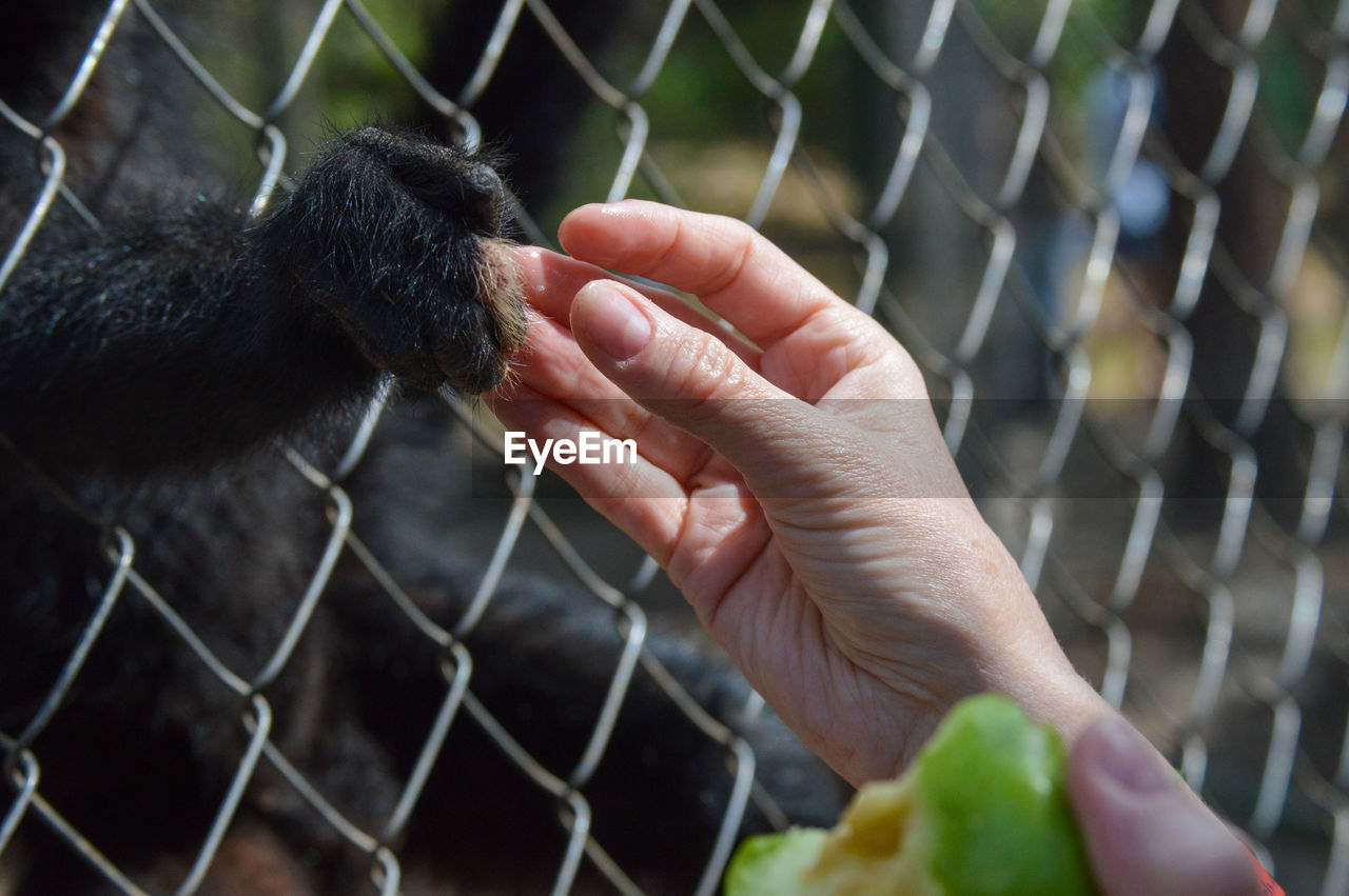 Close-up of a hand feeding to chainlink fence