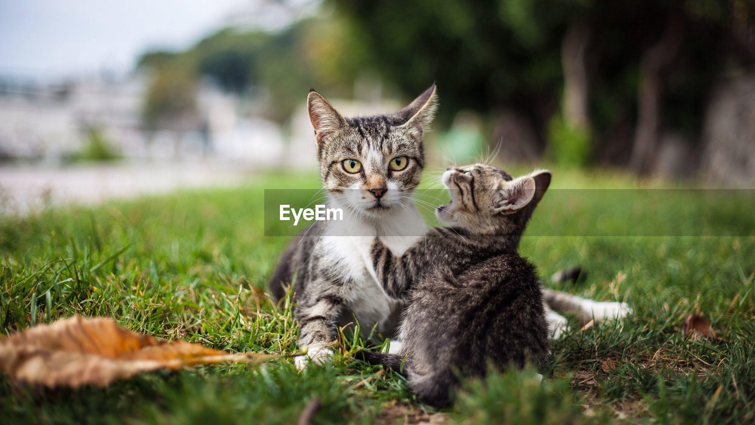 Portrait of cat with kitten in park
