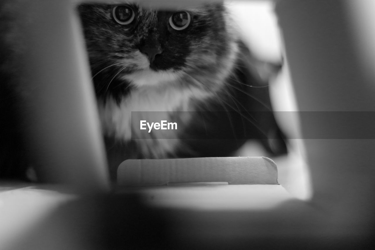 domestic cat, pets, indoors, one animal, domestic animals, feline, mammal, animal themes, whisker, no people, table, close-up, day