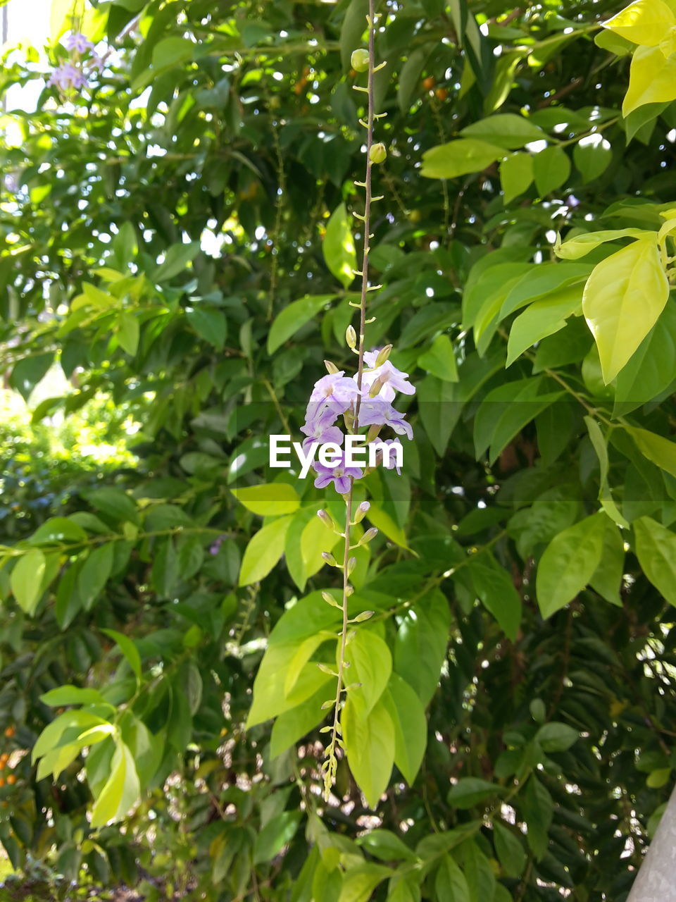 growth, leaf, green color, flower, nature, plant, fragility, freshness, beauty in nature, petal, day, outdoors, no people, blooming, close-up, flower head, tree