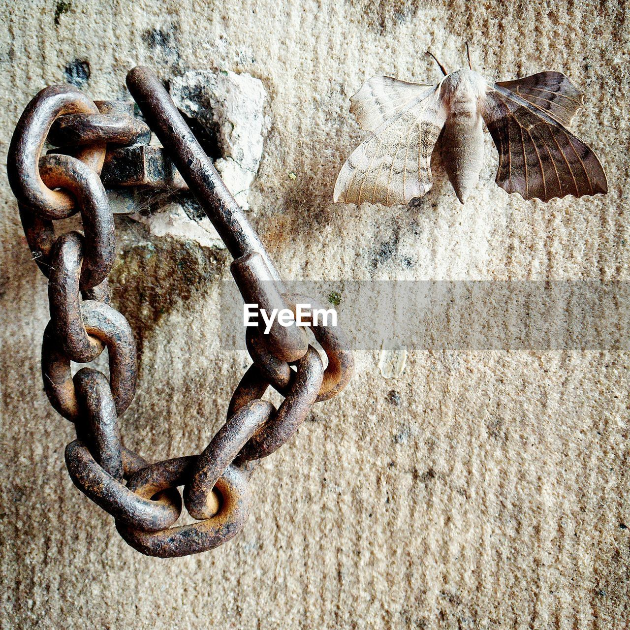 metal, no people, rusty, chain, wall - building feature, close-up, day, nature, weathered, outdoors, animal, group of animals, animal themes, wall, hanging, textured, connection, sunlight, architecture, land, concrete