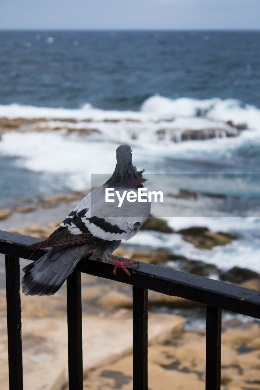 animal themes, sea, vertebrate, bird, animal wildlife, animal, animals in the wild, perching, water, railing, one animal, focus on foreground, no people, nature, day, scenics - nature, wood - material, beauty in nature, outdoors, seagull, horizon over water, wooden post