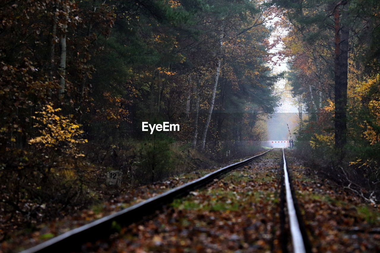 tree, rail transportation, railroad track, track, transportation, plant, nature, direction, autumn, the way forward, no people, forest, day, change, land, growth, tranquility, diminishing perspective, leaf, outdoors, parallel