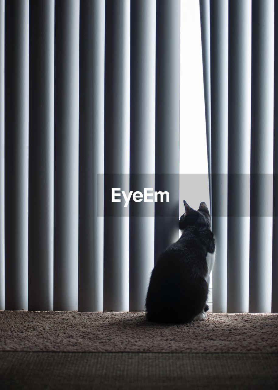 Cat sitting against curtain