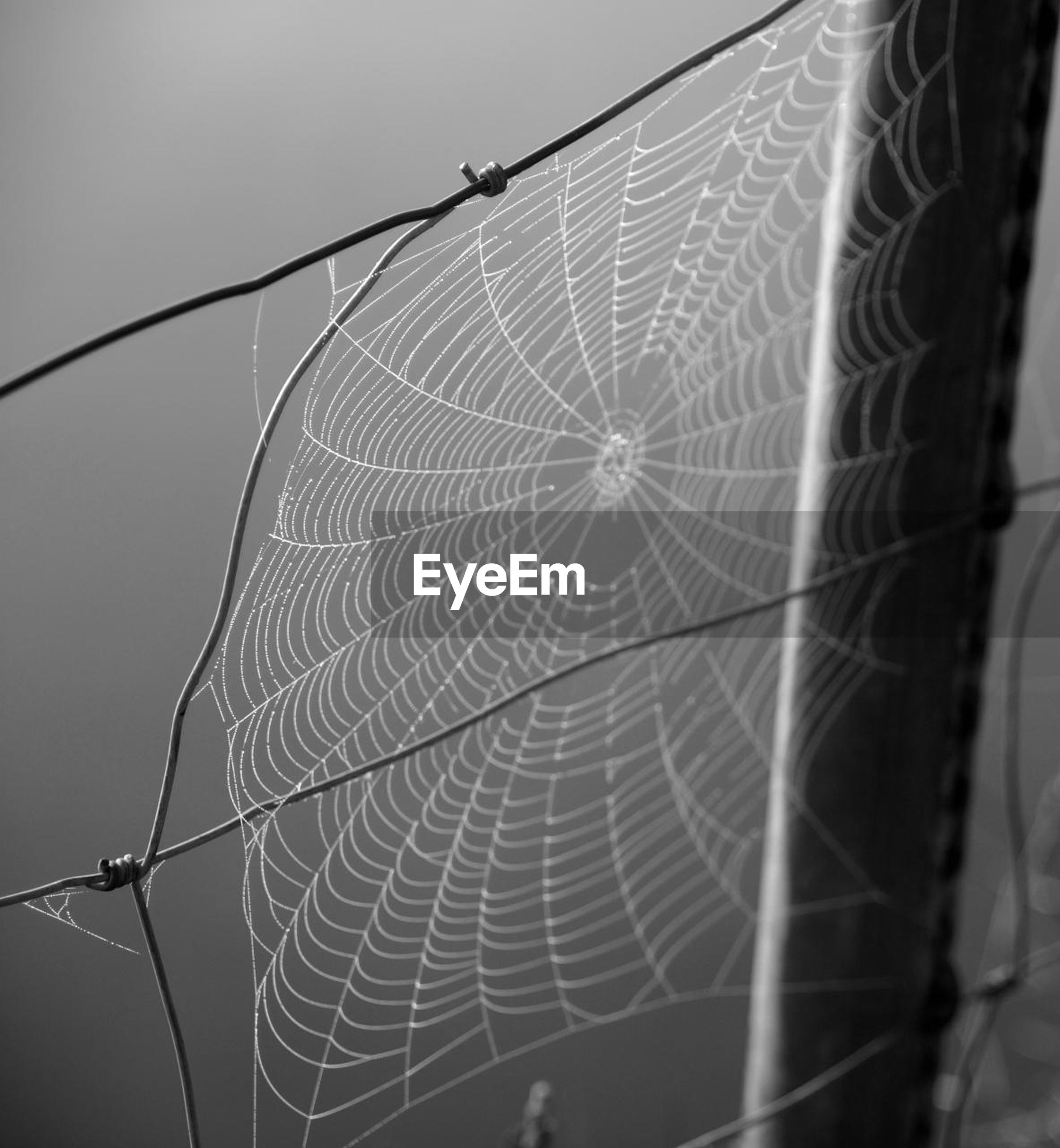 spider web, focus on foreground, complexity, low angle view, close-up, connection, electricity pylon, power line, day, nature, natural pattern, power supply, cable, outdoors, fuel and power generation, electricity, no people, clear sky, fragility, plant