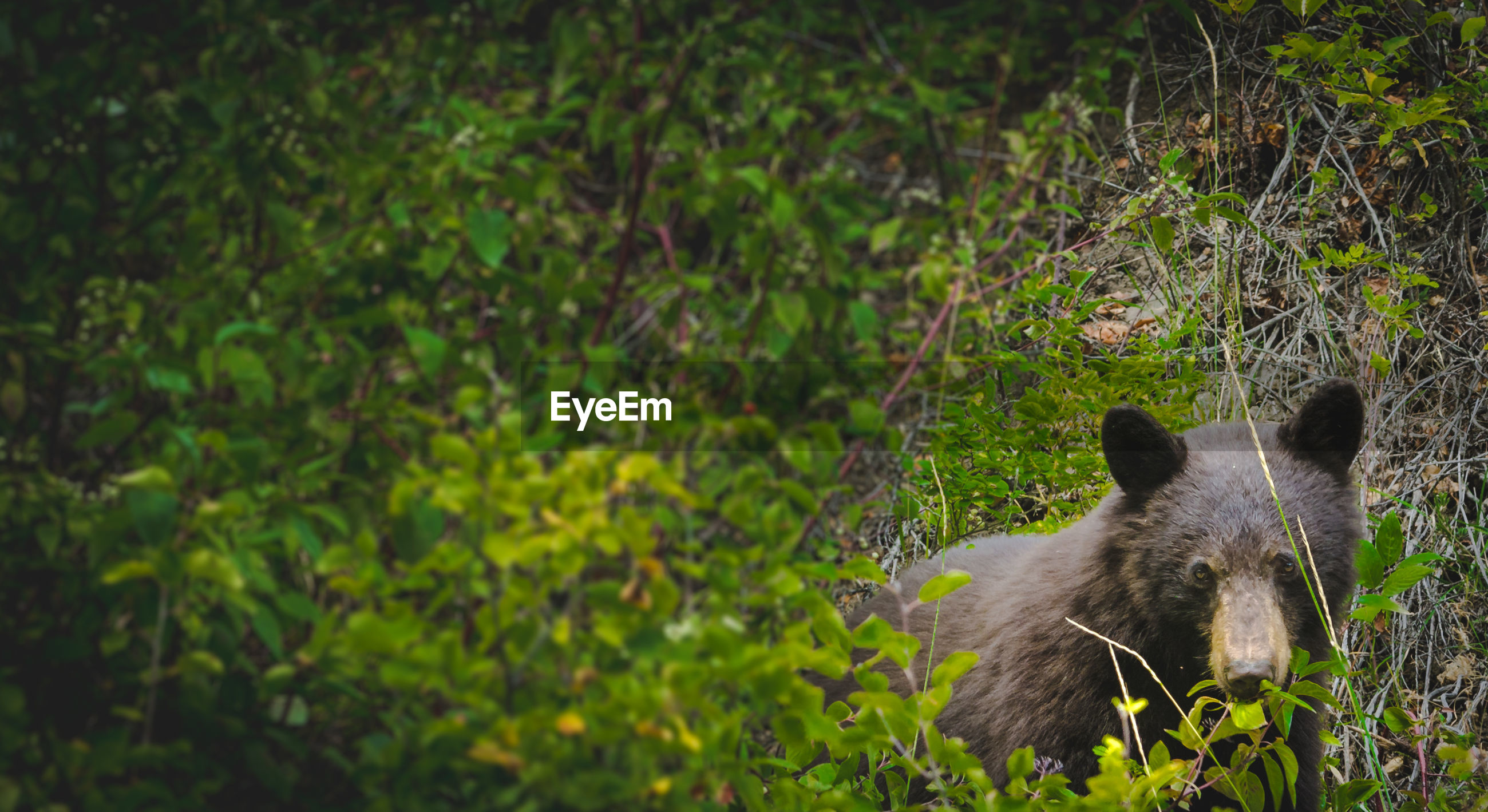 Bear amidst plants at forest