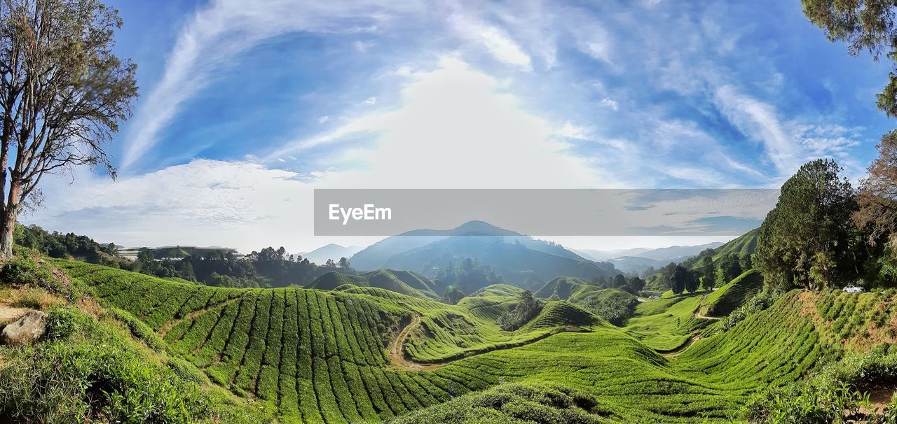 scenics - nature, landscape, sky, beauty in nature, cloud - sky, tranquil scene, tranquility, mountain, environment, green color, nature, plant, agriculture, growth, rural scene, land, day, crop, idyllic, tree, mountain range, no people, outdoors, plantation, tea crop