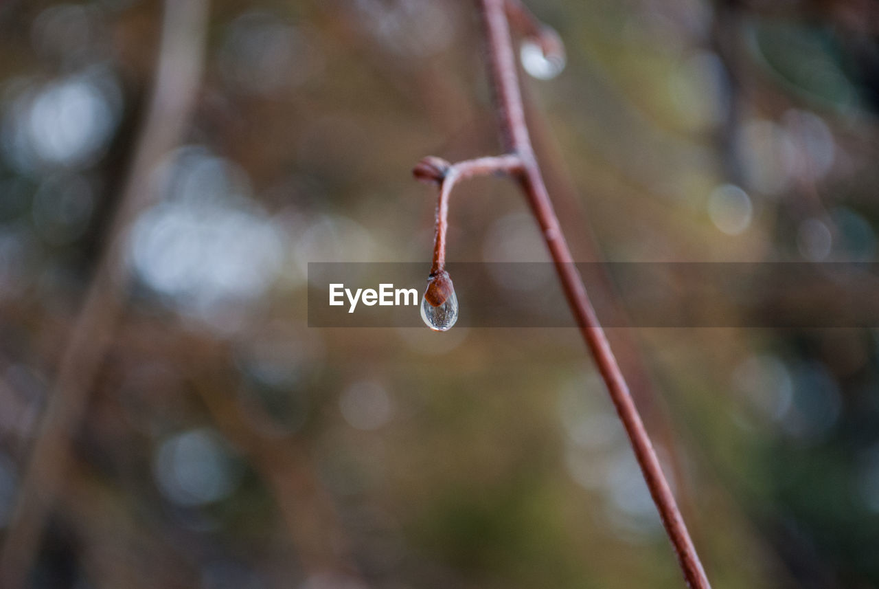 focus on foreground, close-up, no people, day, plant, nature, drop, twig, water, beauty in nature, growth, selective focus, outdoors, fragility, plant stem, tranquility, vulnerability, freshness, wet, purity, raindrop