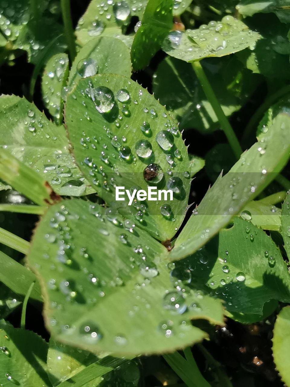 drop, water, wet, green color, plant part, leaf, growth, beauty in nature, nature, close-up, freshness, plant, no people, rain, purity, dew, day, full frame, raindrop, leaves, rainy season, outdoors