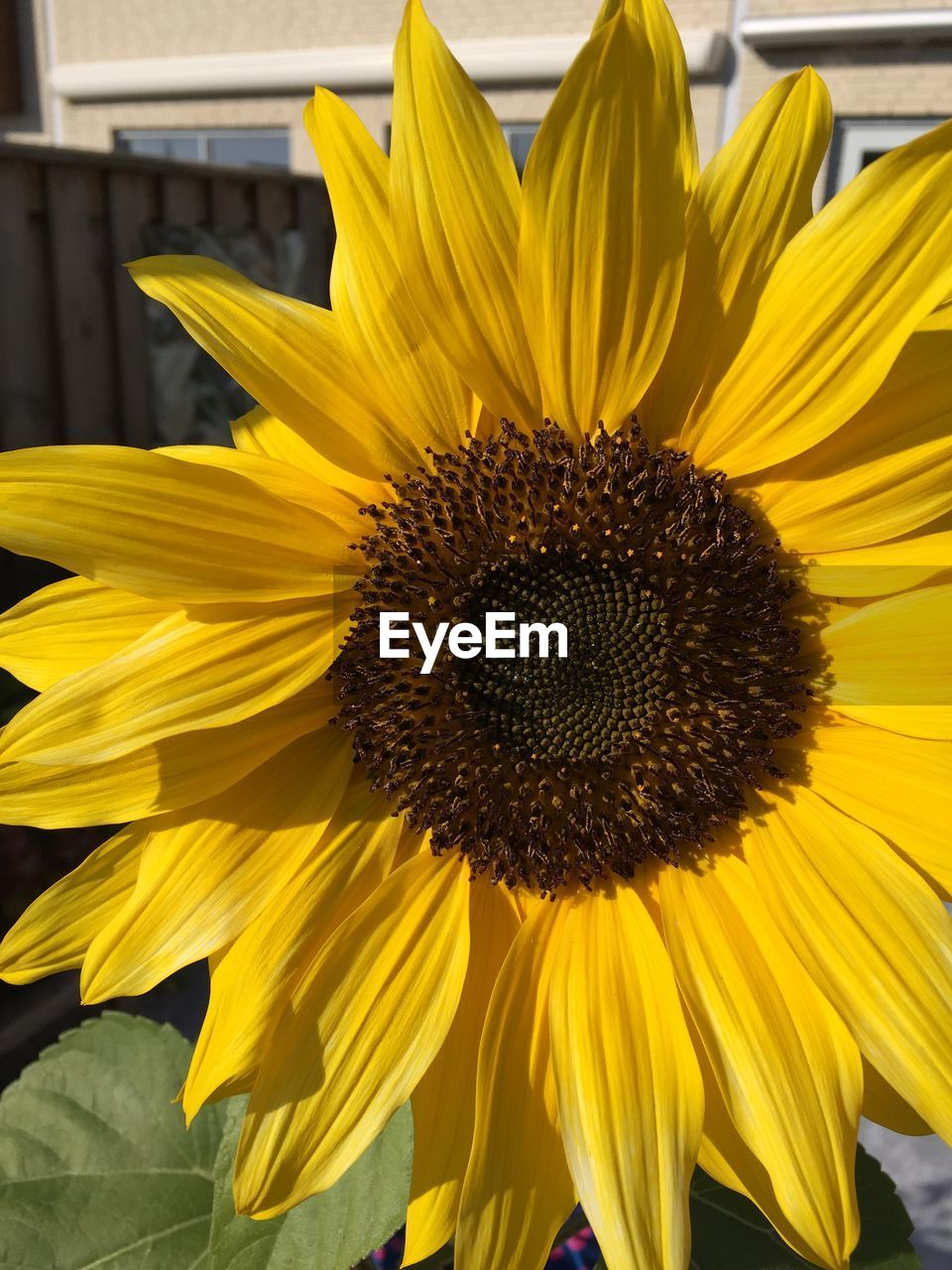 yellow, flower, petal, fragility, flower head, growth, sunflower, pollen, freshness, no people, nature, outdoors, beauty in nature, close-up, day, plant, blooming, black-eyed susan
