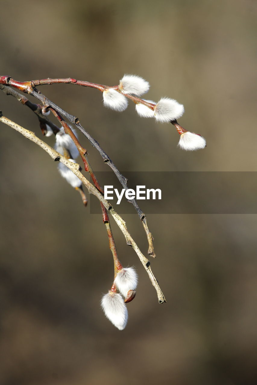 CLOSE-UP OF WHITE TWIG ON TWIGS