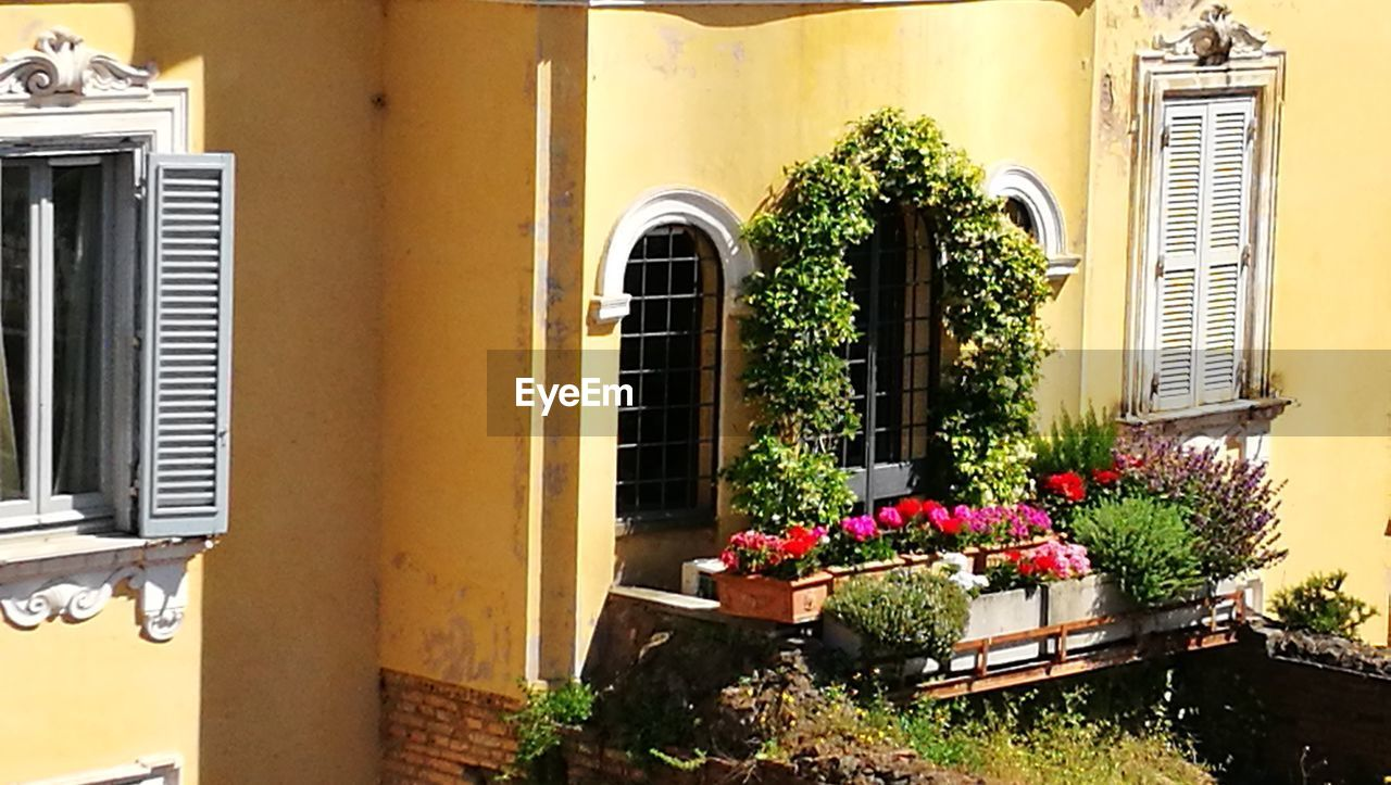 architecture, building exterior, growth, built structure, potted plant, plant, flower, window, day, outdoors, no people, nature, window box, beauty in nature