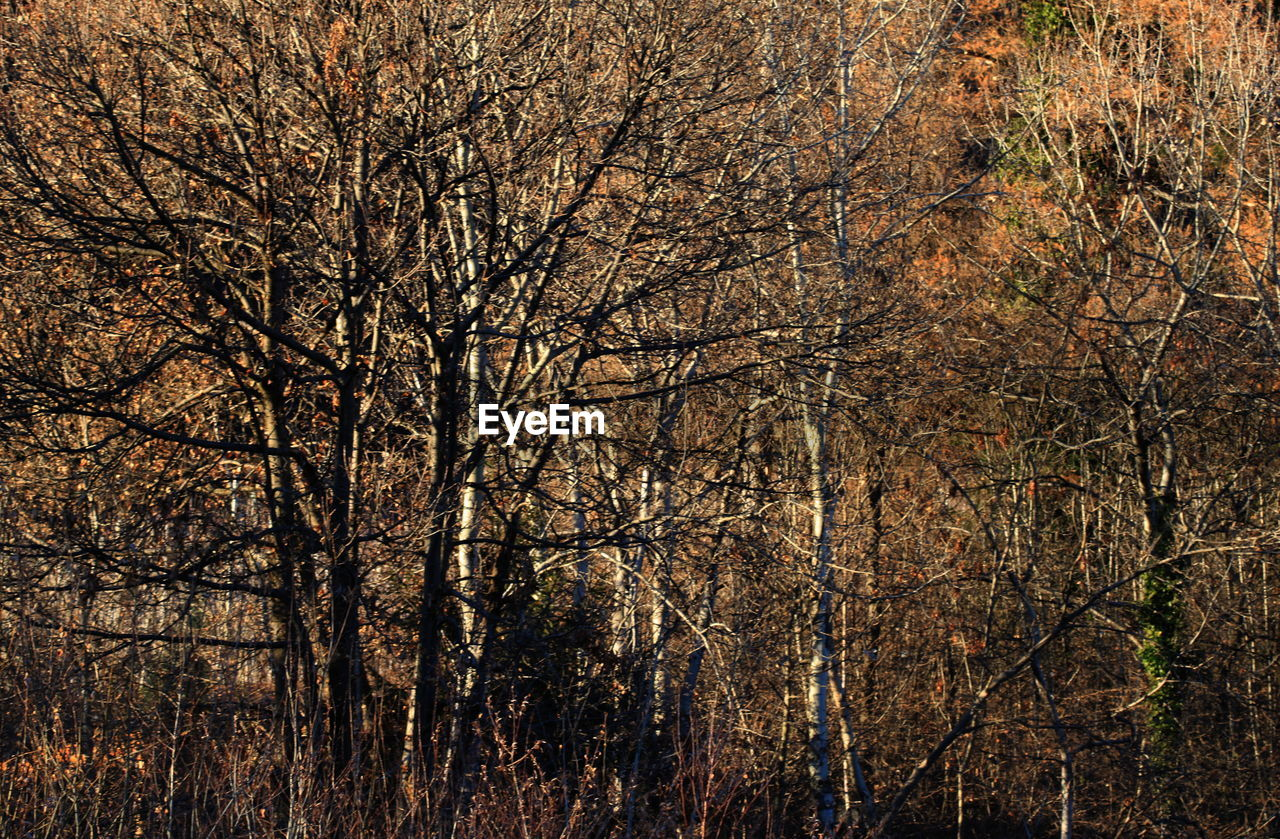 bare tree, tree, autumn, nature, forest, no people, branch, beauty in nature, outdoors, day, tranquility, scenics, freshness