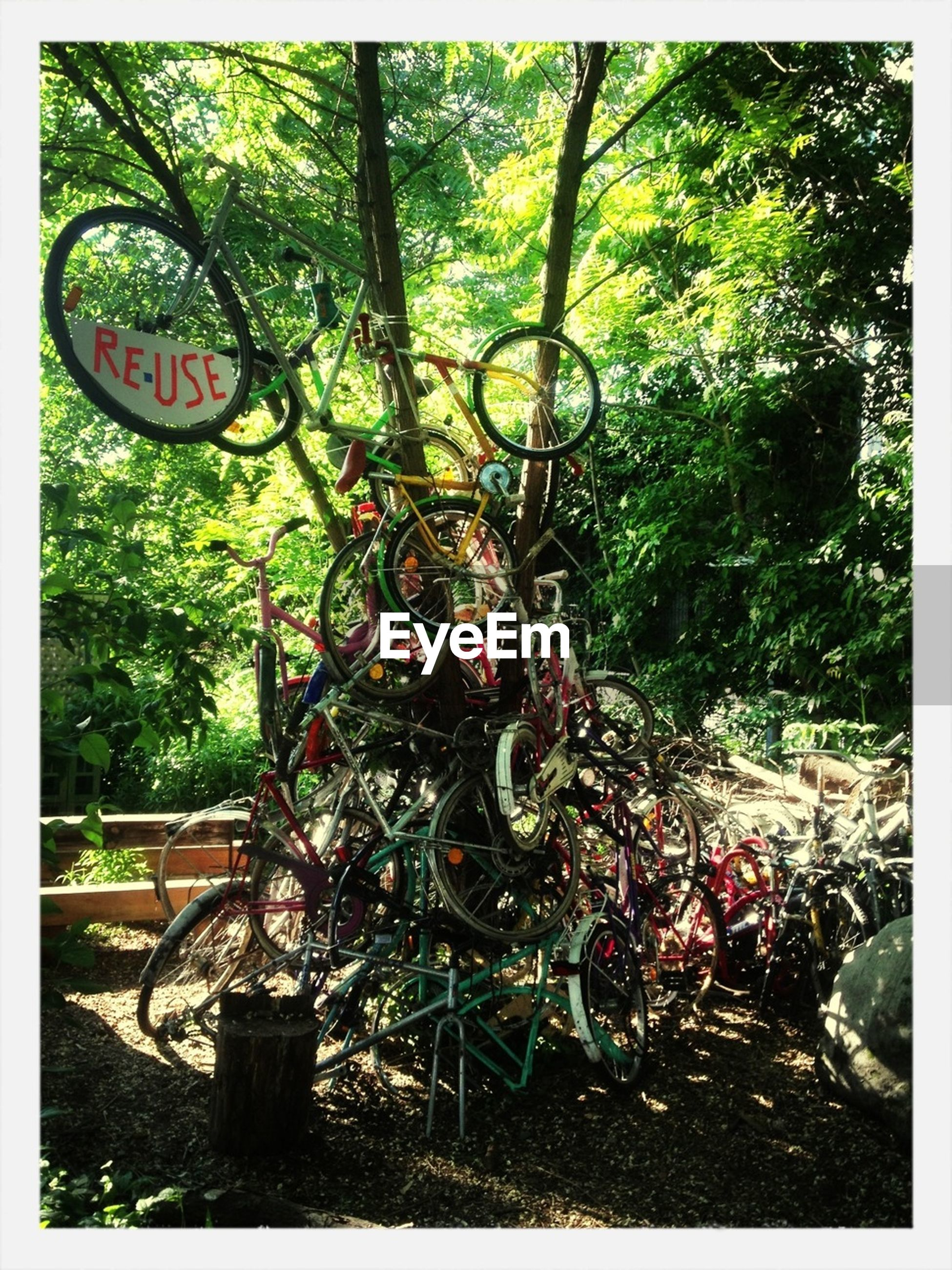 transfer print, auto post production filter, tree, bicycle, land vehicle, mode of transport, transportation, growth, stationary, parking, parked, plant, branch, outdoors, park - man made space, day, no people, wheel, front or back yard, metal
