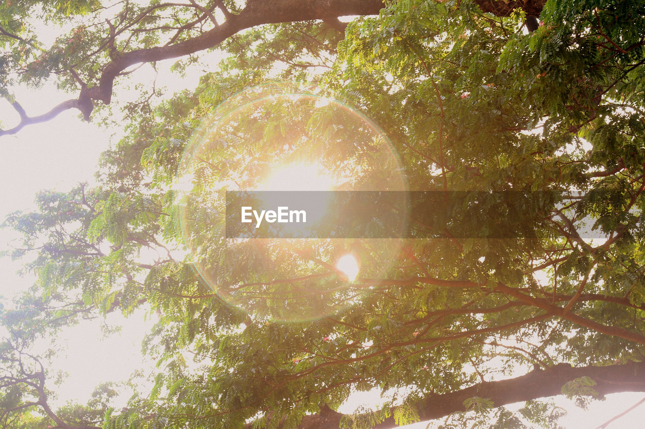 tree, low angle view, branch, growth, nature, sunlight, green color, tranquility, sun, no people, directly below, day, beauty in nature, outdoors, leaf, sky, close-up, lens flare, circle, tree trunk