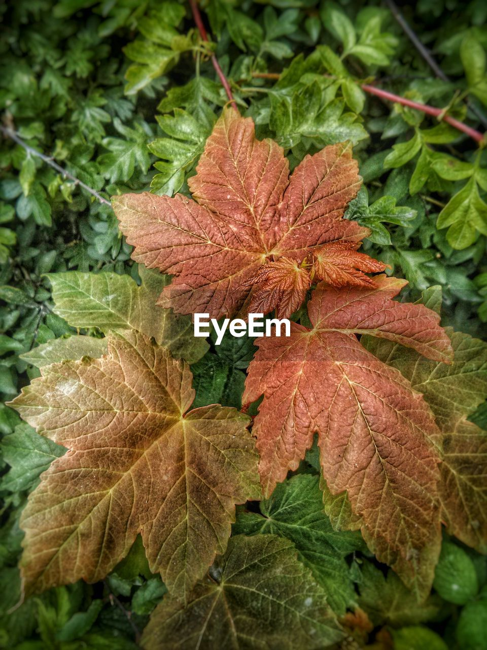 leaf, nature, day, growth, green color, beauty in nature, autumn, plant, close-up, outdoors, no people, fragility, freshness, flower head
