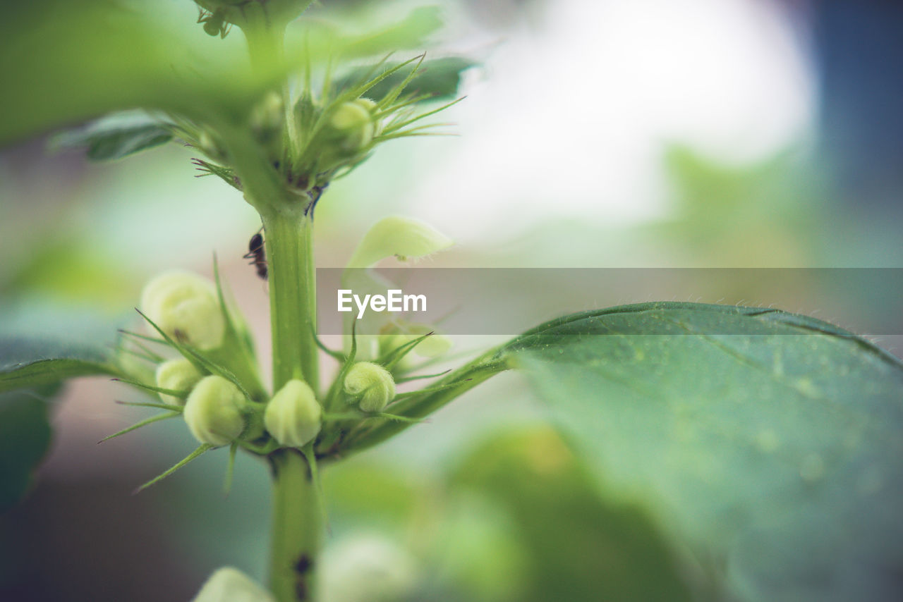 growth, plant, plant part, leaf, selective focus, close-up, beauty in nature, freshness, green color, nature, day, no people, vulnerability, fragility, flower, focus on foreground, flowering plant, beginnings, outdoors, bud