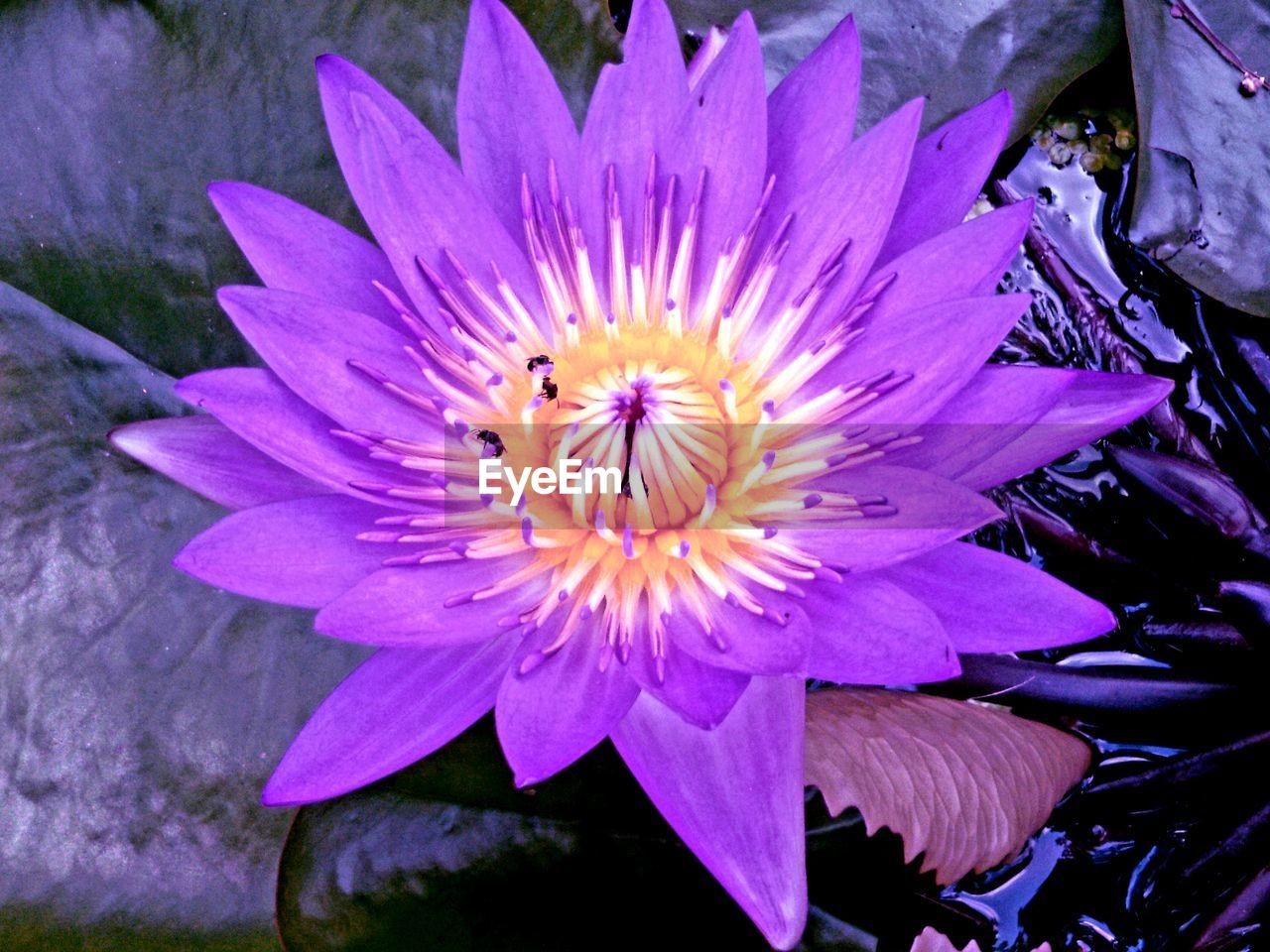 flower, flowering plant, plant, petal, freshness, vulnerability, beauty in nature, fragility, flower head, inflorescence, close-up, growth, nature, pollen, purple, no people, pink color, high angle view, springtime