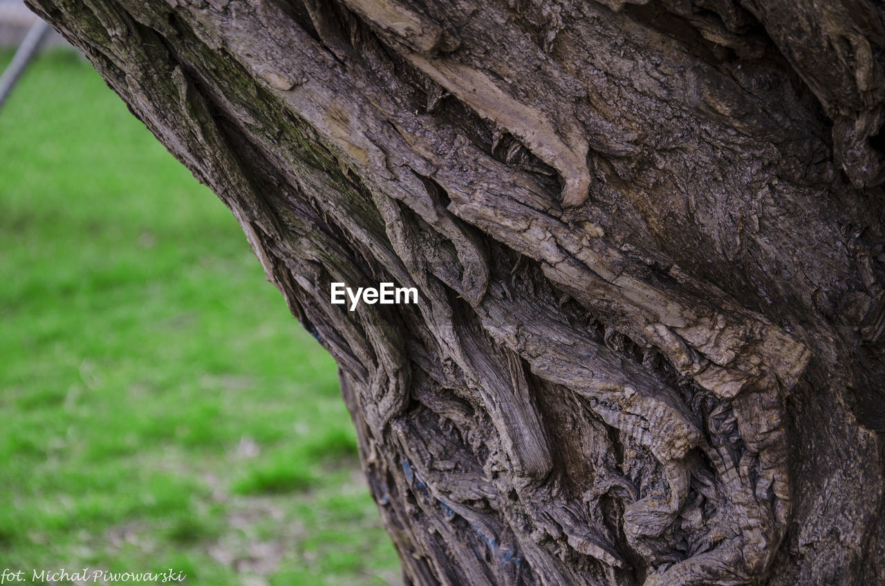 tree trunk, tree, textured, bark, close-up, rough, nature, no people, day, outdoors, growth