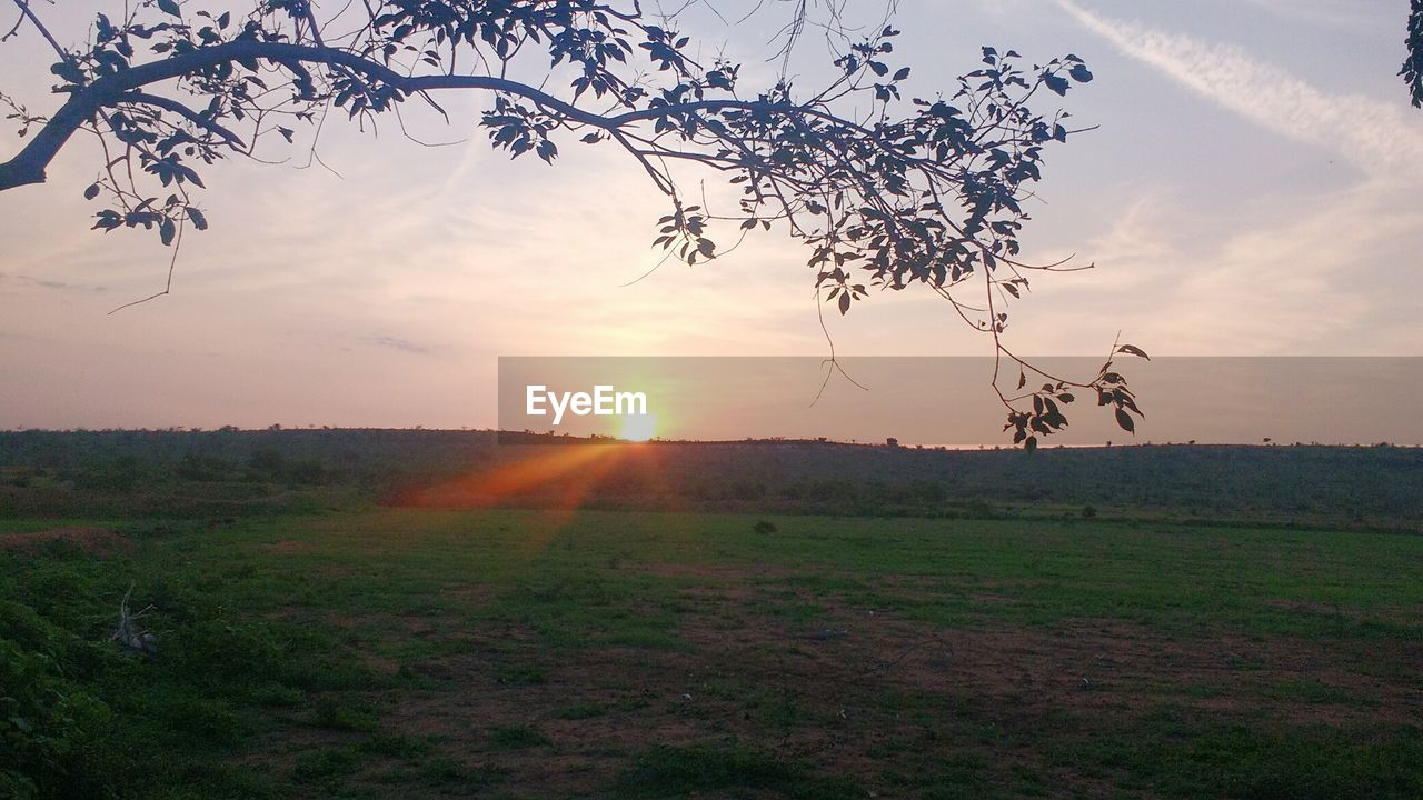 field, sunset, nature, tree, landscape, beauty in nature, tranquil scene, sun, scenics, sky, tranquility, grass, outdoors, no people, growth, sunlight, rural scene, day, mammal
