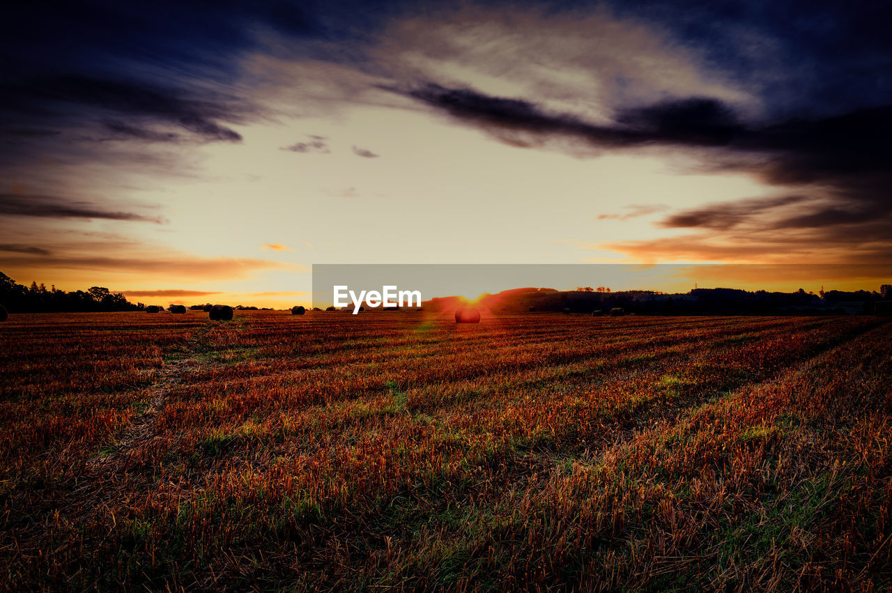 sunset, field, sun, landscape, nature, sky, tranquility, agriculture, beauty in nature, tranquil scene, scenics, no people, rural scene, growth, outdoors