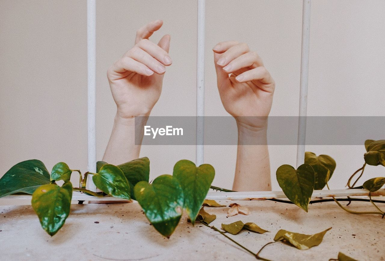 real people, one person, leaf, plant part, indoors, plant, human body part, body part, hand, human hand, green color, low section, white color, barefoot, wall - building feature, nature, human leg, lifestyles, flooring, human foot, finger, leaves