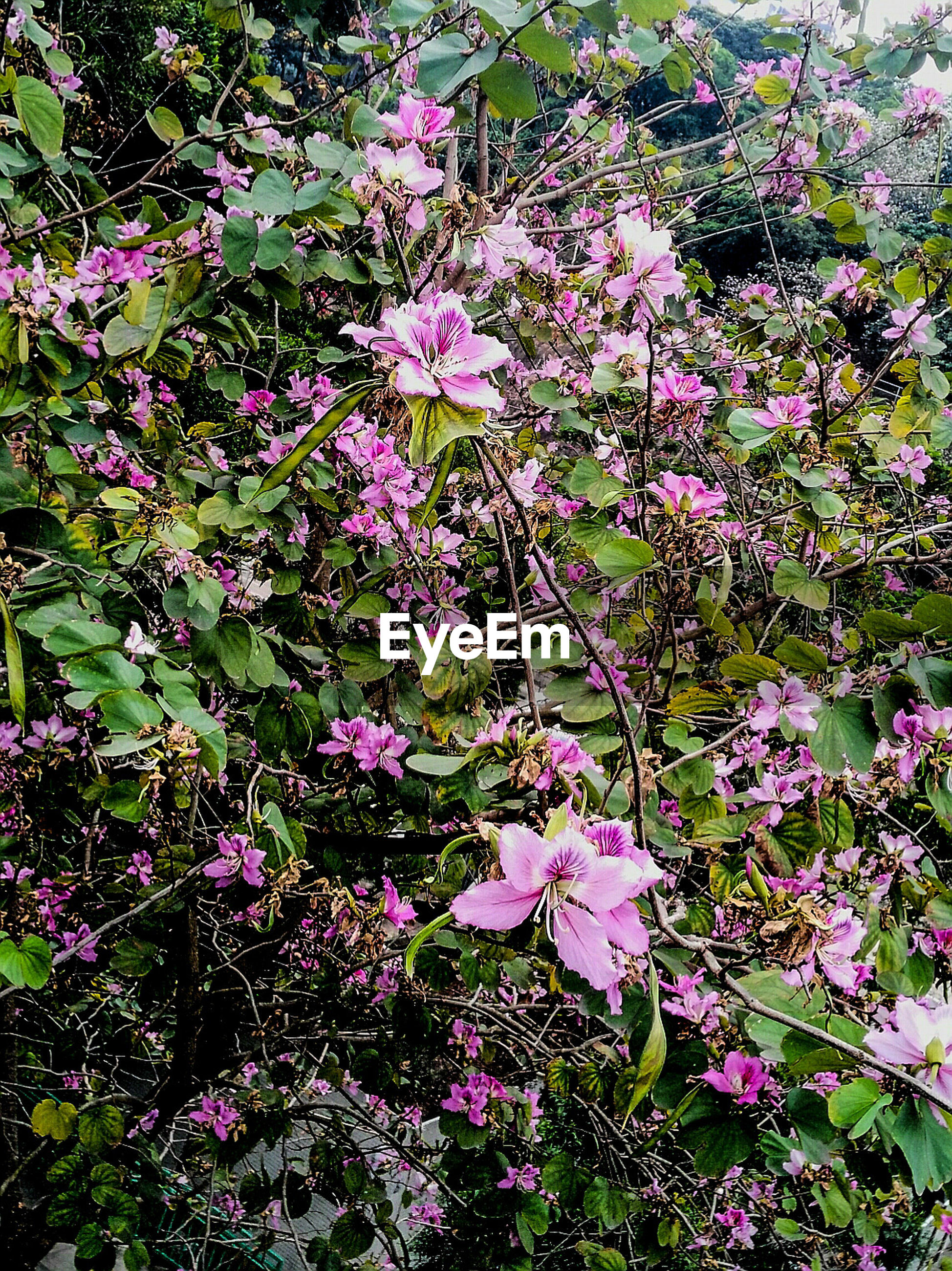 flower, freshness, fragility, growth, beauty in nature, plant, nature, pink color, petal, in bloom, day, purple, flower head, blossom, softness, springtime, botany, full frame, green color, blooming, outdoors, plant life, formal garden, tranquility, scenics, bloom, no people, growing