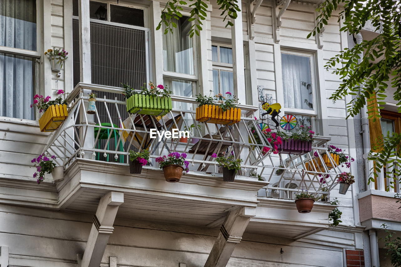 building exterior, architecture, built structure, house, window, day, outdoors, low angle view, hanging, no people, tree, flower, city