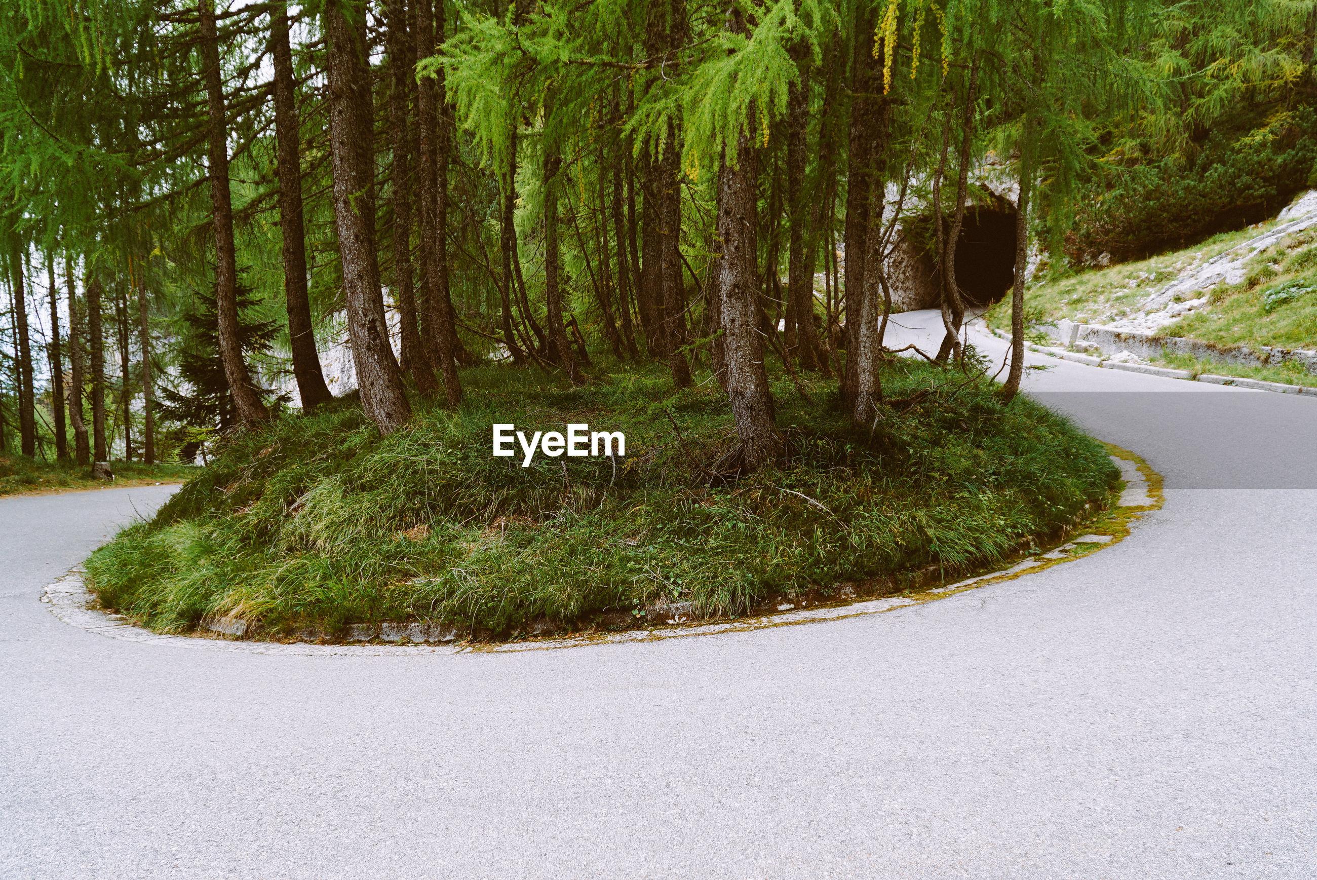 Trees amidst road