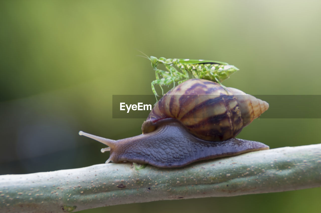 animal wildlife, gastropod, mollusk, snail, shell, animal, animal themes, animals in the wild, invertebrate, animal shell, close-up, one animal, animal antenna, plant part, focus on foreground, animal body part, leaf, nature, boredom, day, no people, outdoors, small