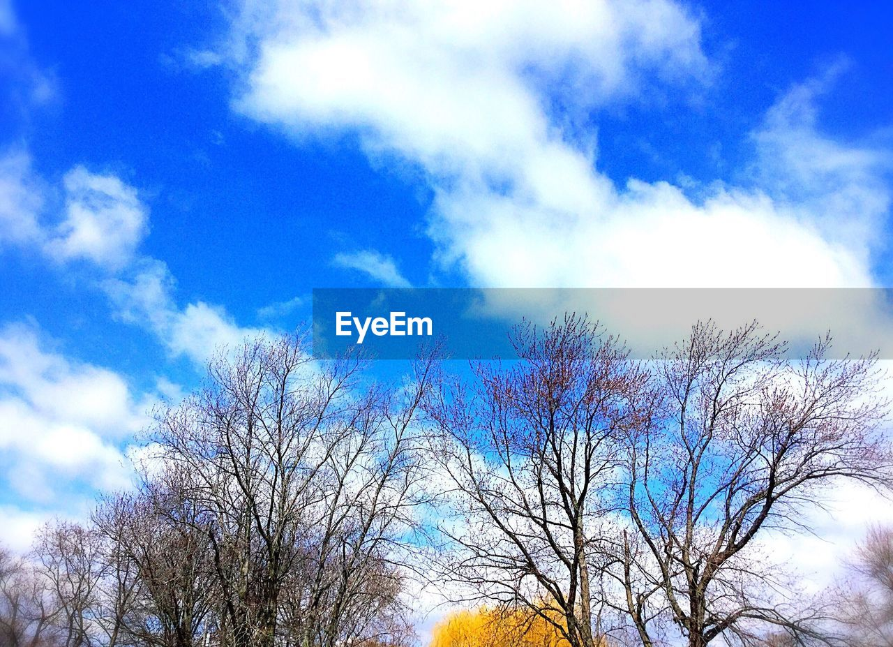 sky, low angle view, bare tree, tree, cloud - sky, blue, beauty in nature, day, nature, outdoors, branch, scenics, no people