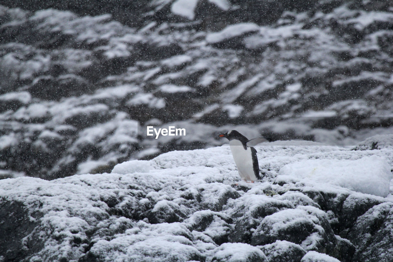 BIRD ON SNOW COVERED LANDSCAPE DURING WINTER