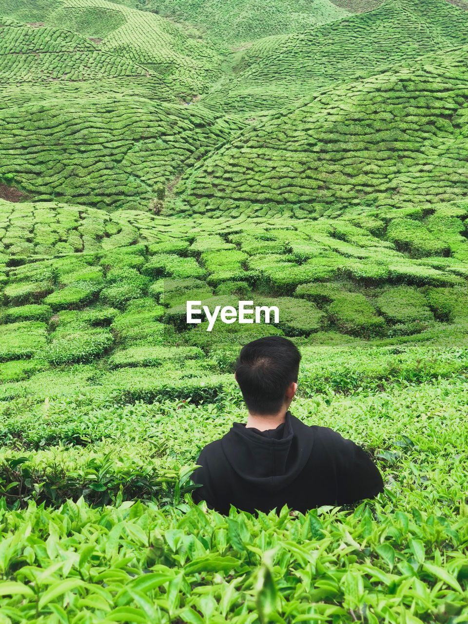 Rear view of man looking at terraced field