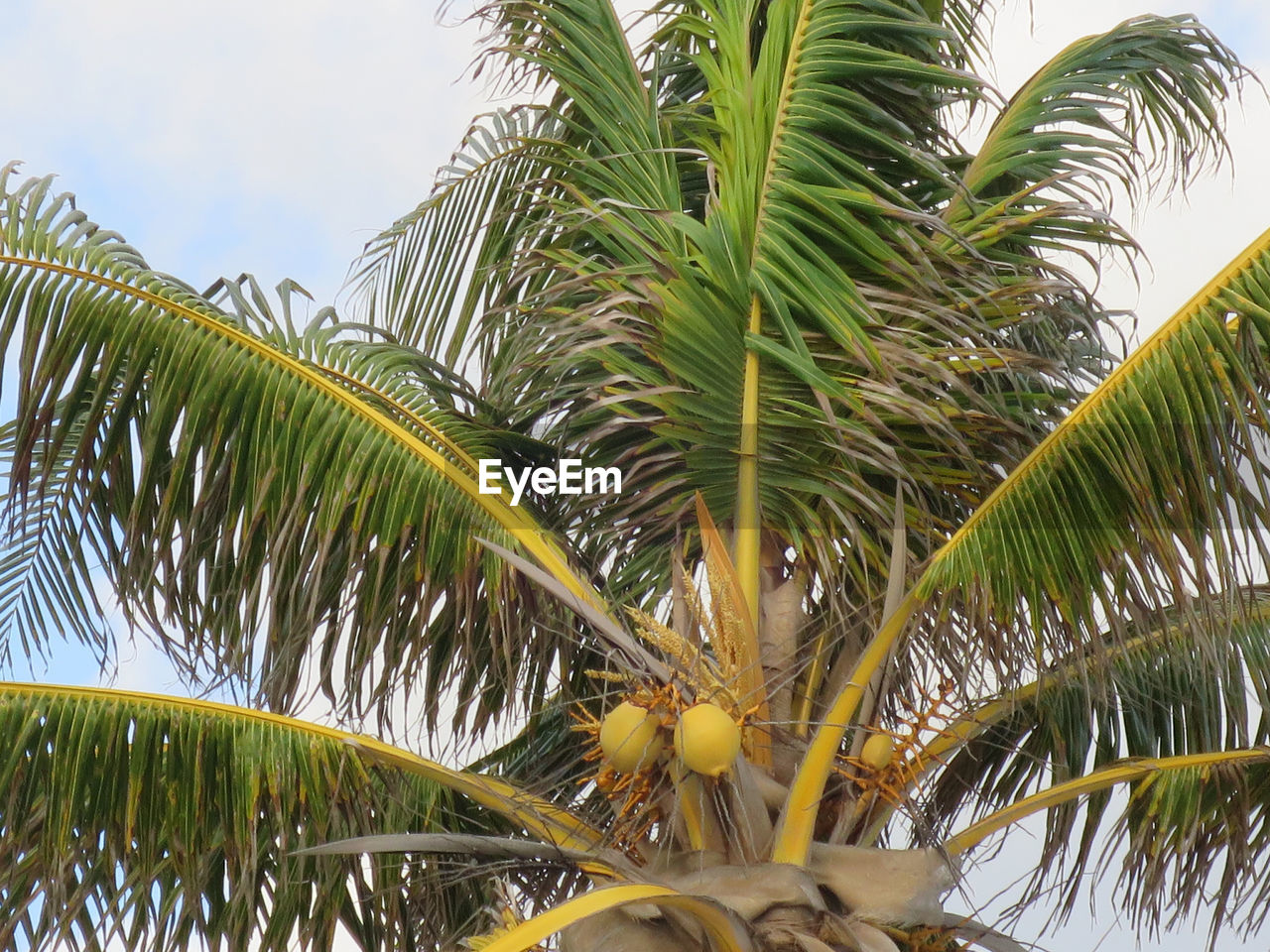 palm tree, growth, green color, leaf, nature, beauty in nature, tree, plant, no people, day, close-up, freshness, outdoors, sky, frond