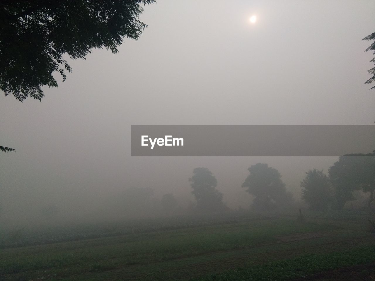tree, fog, nature, landscape, beauty in nature, tranquility, mist, tranquil scene, hazy, grass, growth, outdoors, idyllic, scenics, field, no people, day, sky