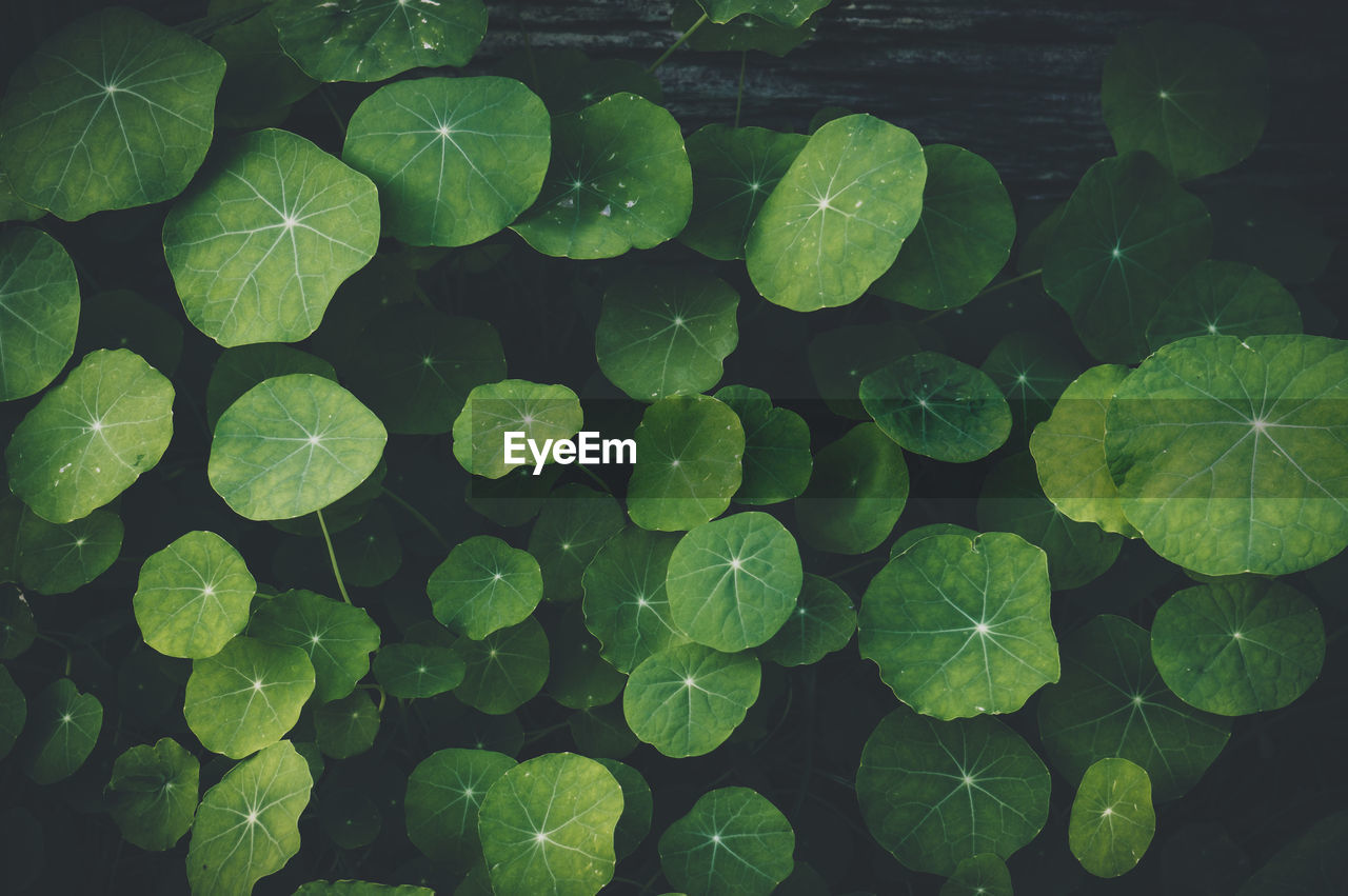 FULL FRAME SHOT OF PLANTS IN WATER
