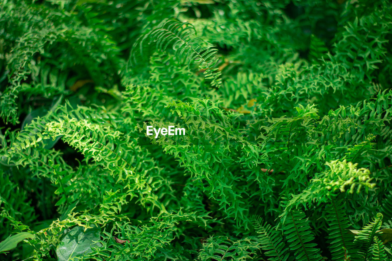 green color, plant, growth, full frame, no people, leaf, plant part, nature, beauty in nature, backgrounds, close-up, day, fern, freshness, outdoors, foliage, selective focus, tree, lush foliage, land, leaves
