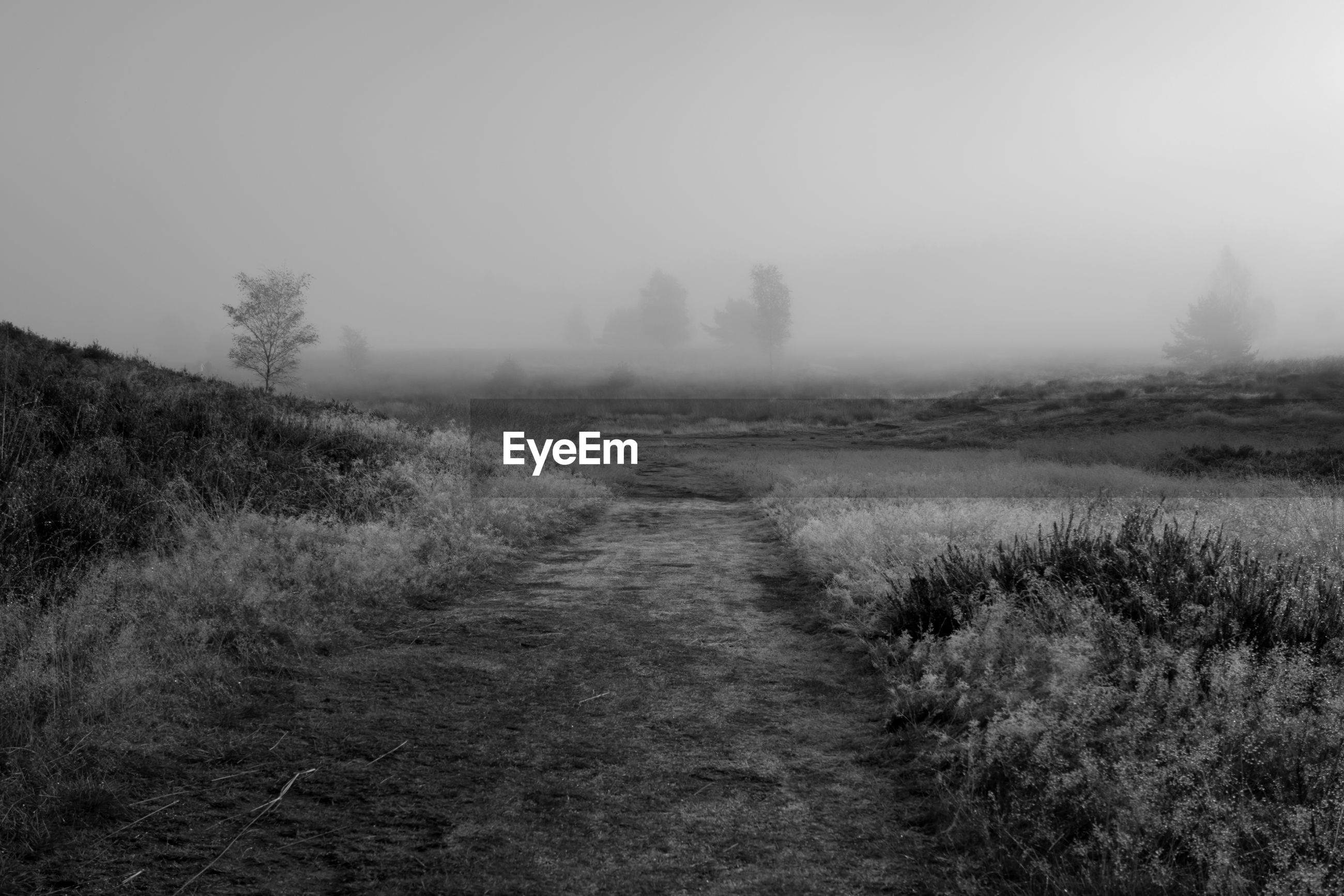 VIEW OF GRASSY LANDSCAPE IN FOGGY WEATHER